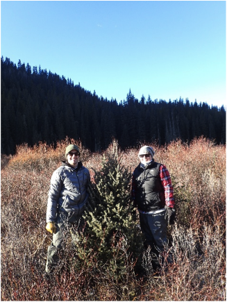 tree-hunt1